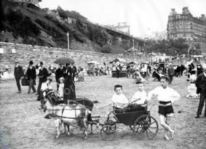 Goat Cart on South Sands, Scarborough